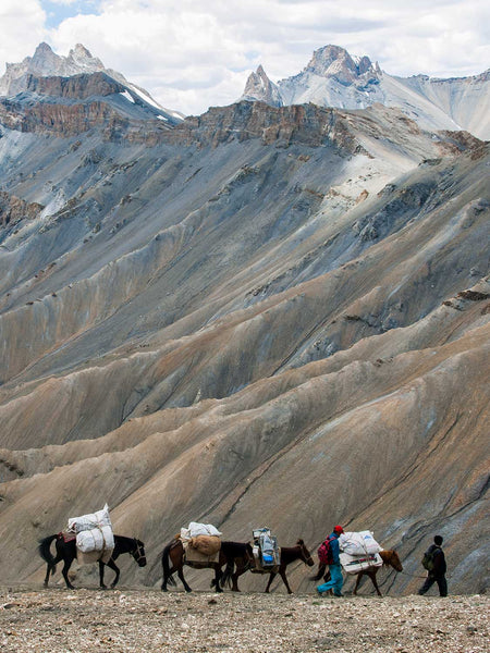 Ponies Descending from the Zarlung Karpo La, Ladakh