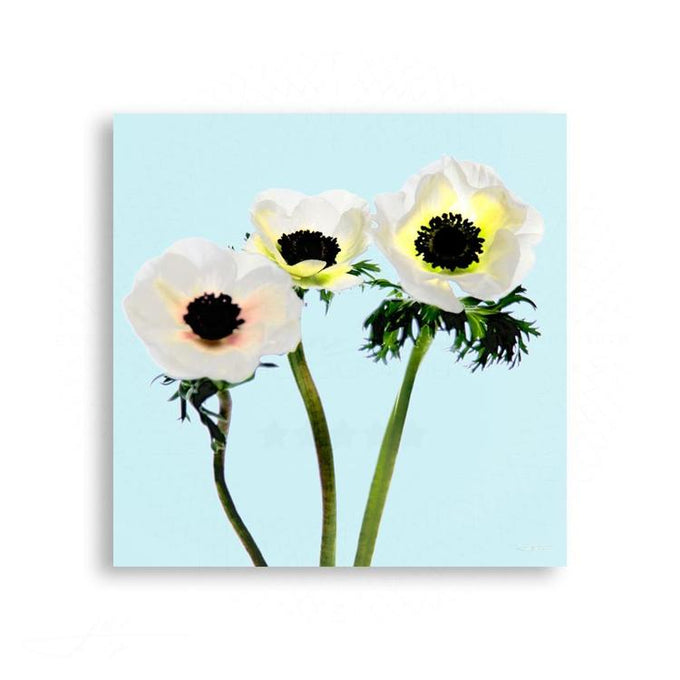 Fauna & Flora - Anemone Trio In Soft Blue | Limited Edition - jspfinearts