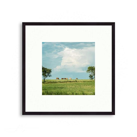 Texas - Longhorns Grazing | Limited Edition - jspfinearts