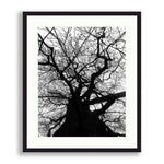 Black and White - Yggdrasil or A Tree Alive | Limited Edition - jspfinearts