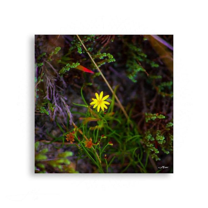 Fauna & Flora - Radiant Beach Wild Flower | Limited Edition - jspfinearts