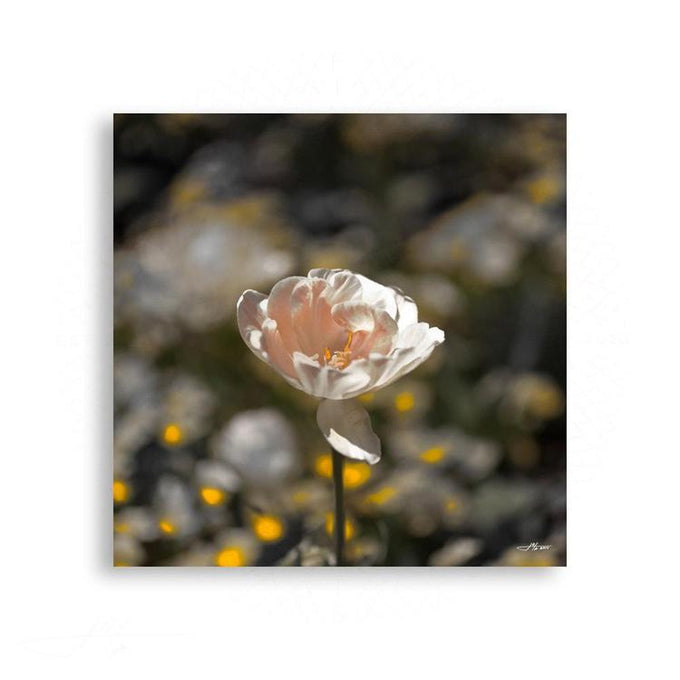 Fauna & Flora - Splendidly Petalled Open Tulip | Limited Edition - jspfinearts