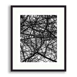 Abstract - Vine Shadows | Limited Edition - jspfinearts