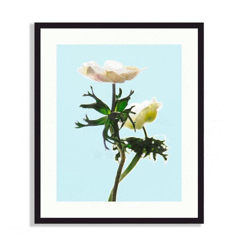 Fauna & Flora - Two Anemones In Soft Light | Limited Edition - jspfinearts