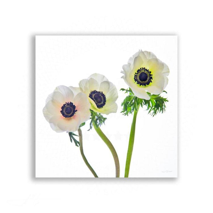 Fauna & Flora - Anemone Trio In Soft Light | Limited Edition - jspfinearts