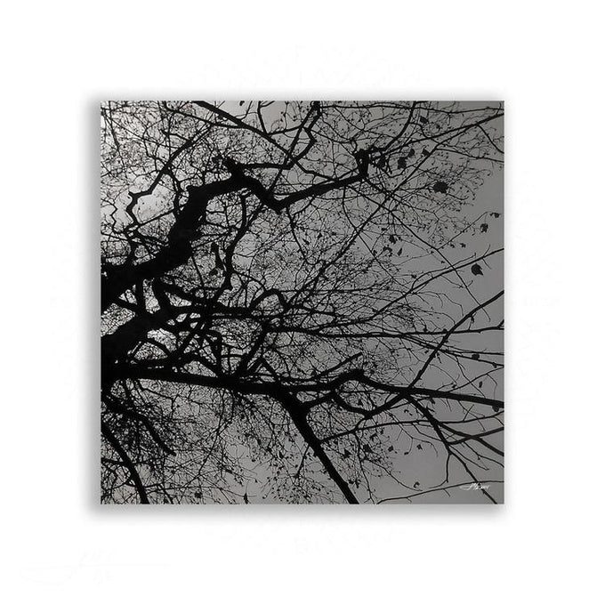 Black and White - Branching Tree in Black and White No 2 | Limited Edition - jspfinearts