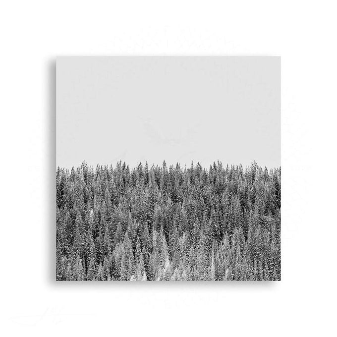 Colorado - Colorado Pines in Black and White | Limited Edition - jspfinearts
