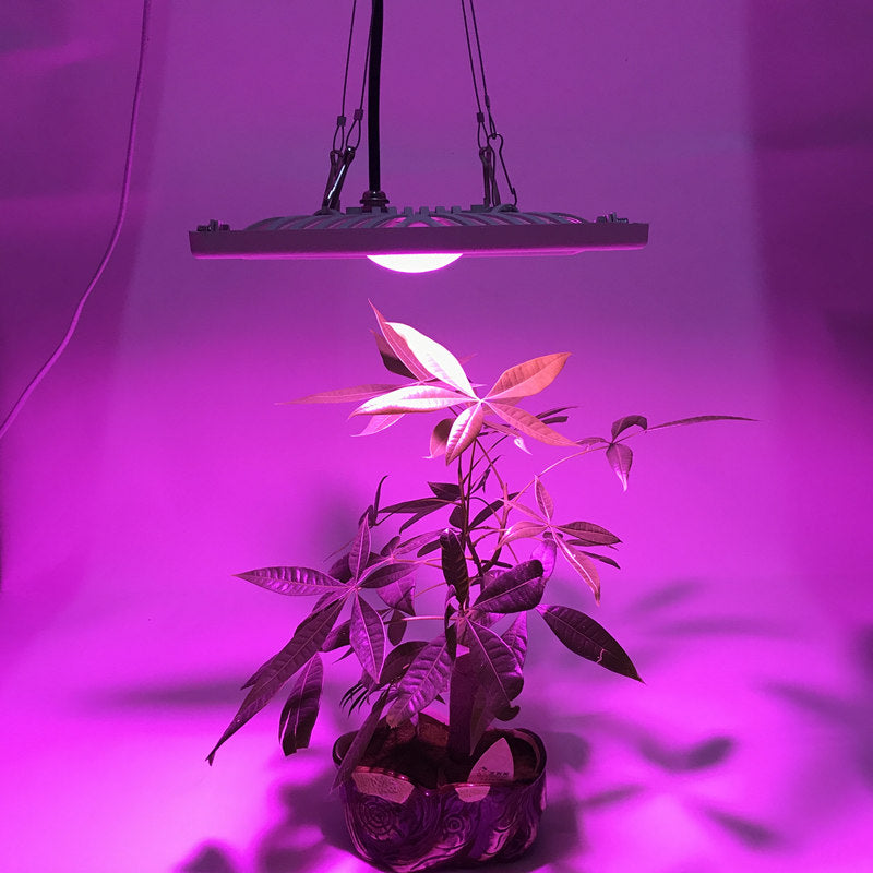 600W Full Spectrum LED Grow Light