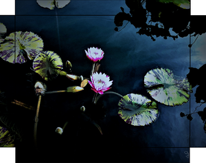 Water Lilies of The NYBG, Twin Lilies By Gio - Stretched canvas print ready to hang