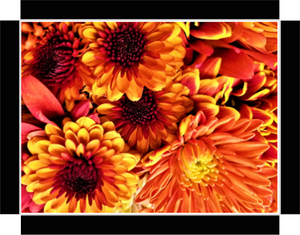 Awesome Flowers, In Yellow and Reds By Gio - Stretched canvas print ready to hang