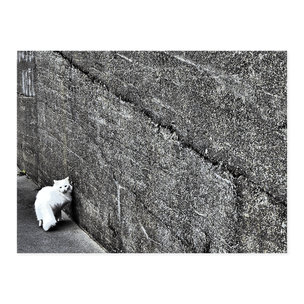 Cat in Torshavn | Dave Dutton Limited Edition Wall Art Print
