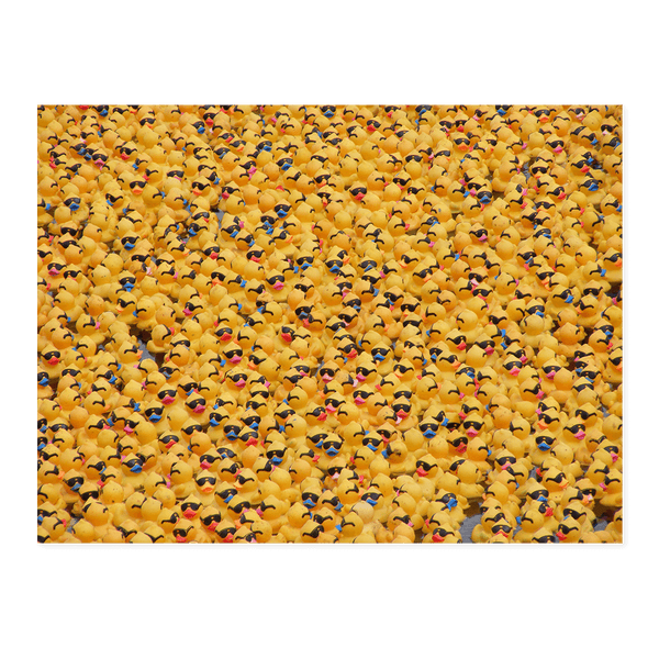 Duck Race | Dave Dutton Limited Edition Wall Art Print