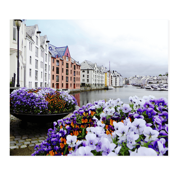 Flowers at Alesund | Dave Dutton Limited Edition Wall Art Print