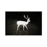 White Stag Herefordshire 2010 | Graeme Cooper Limited Edition Wall Art Print