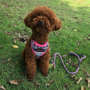 Funky Fashion Pet Dog Harness & Leash