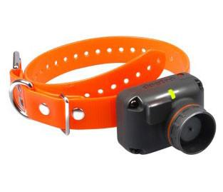 Dogtra Receiver 2500T&B (Orange) - DogTrainerStore