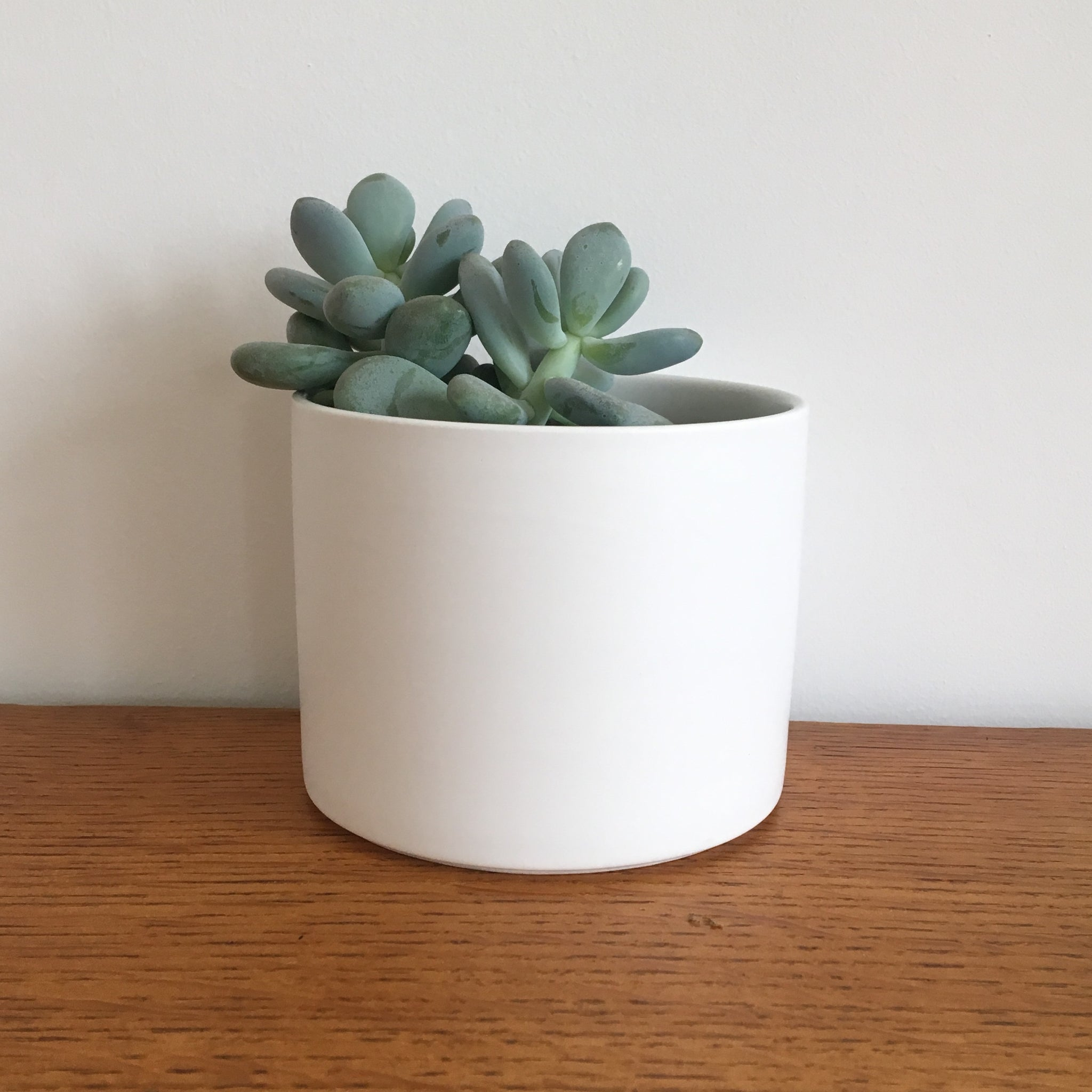 White Porcelain Plant Pot