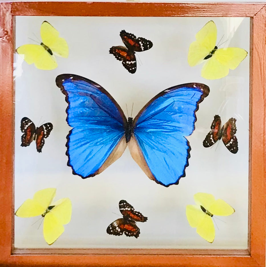 Square frame with Morpho butterfly and eight smaller butterflies