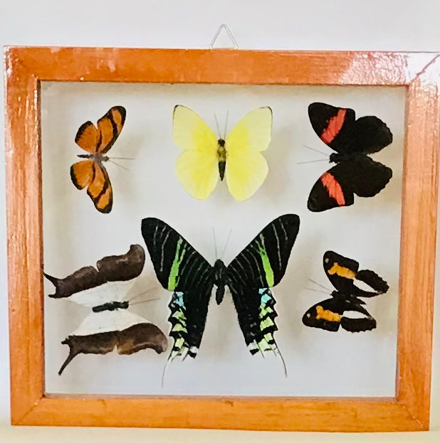 6 butterflies in frame