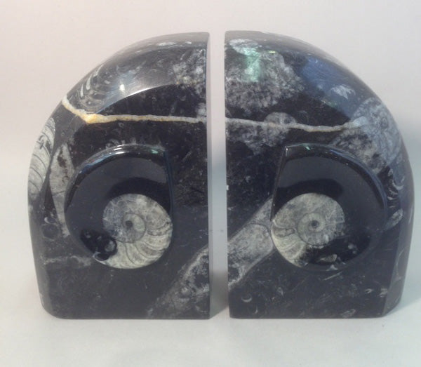 Polished Orthoceras Fossil Bookends