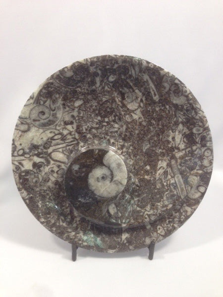 Large Orthoceras Fossil Dish - Michael's Gems and Glass