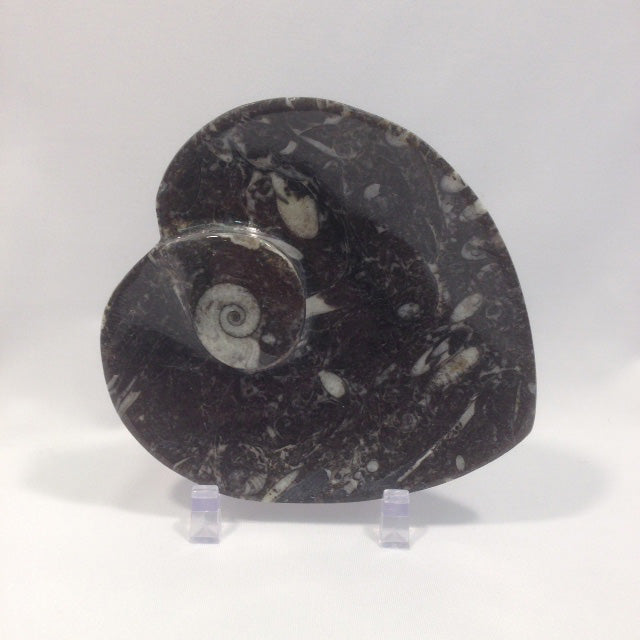 Small Orthoceras Fossil Dish - Michael's Gems and Glass
