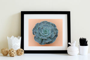 Succulent Prints Wall Art | 8x10 Succulent Decor for Bathroom