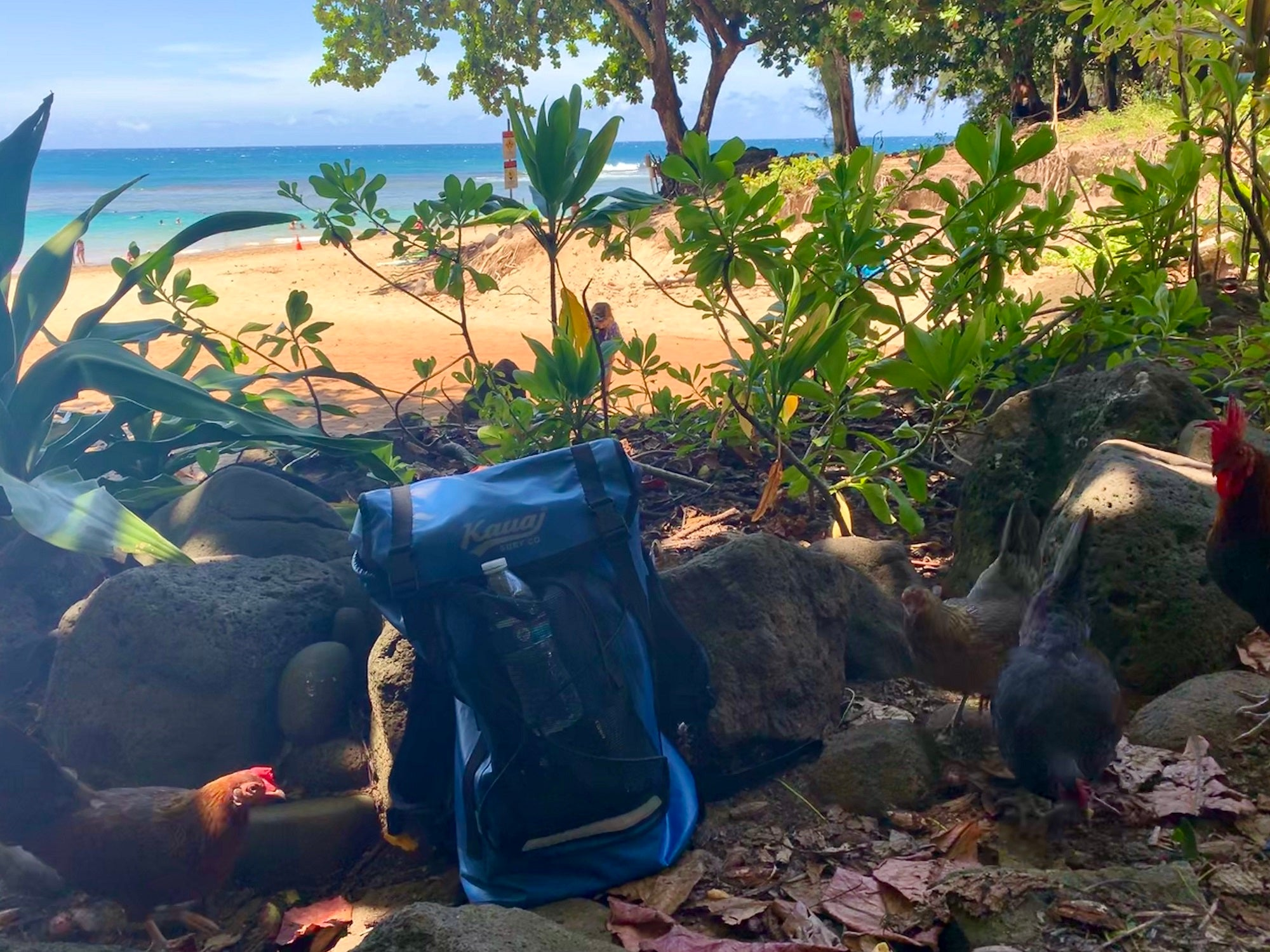 Kauai Chickens Waterproof Backpack