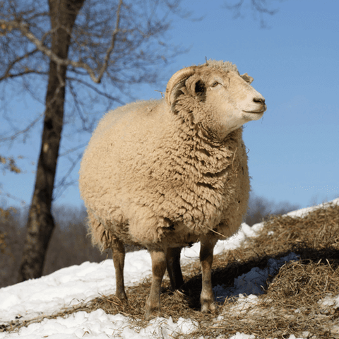 Wool Dryer Balls - Made in USA - Ram on snowy hill