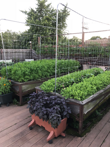 suburban farming - grow our own food