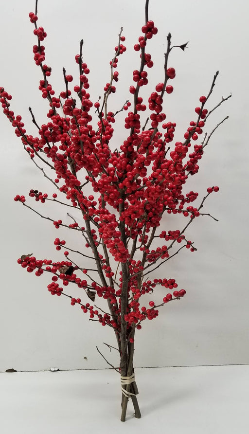 "Winterberry Holly - 18-24"" - Bundle of 5 Stems"