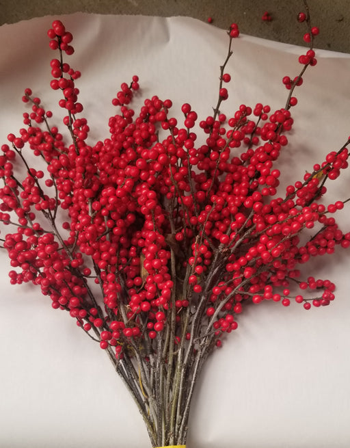 "Winterberry Holly - 9-15"" Tips - Bundle of 25 Stems"