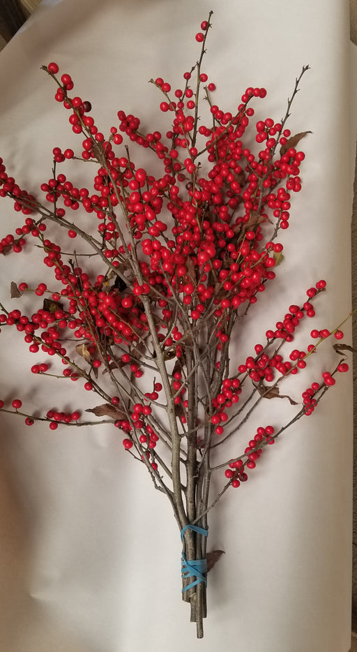 "Winterberry Holly - 12-18"" - Bundle of 5 Stems"