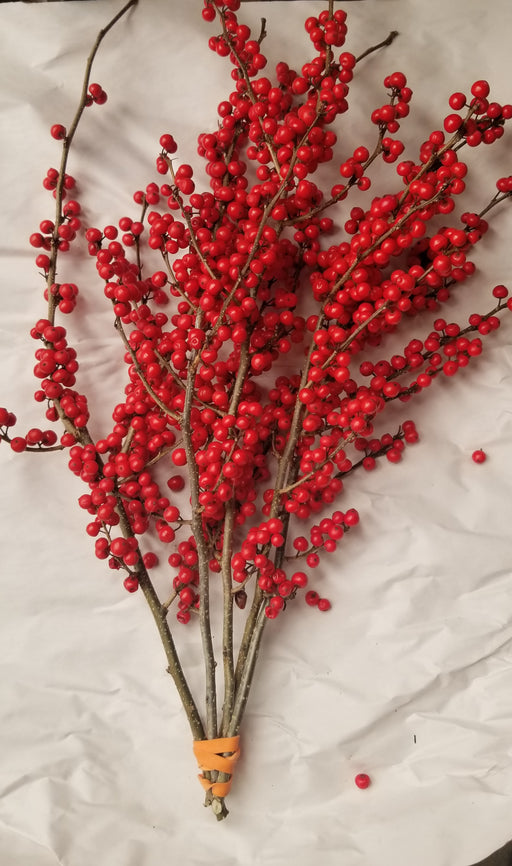 "Winterberry Holly - 8-12"" - Bundle of 5 Stems"