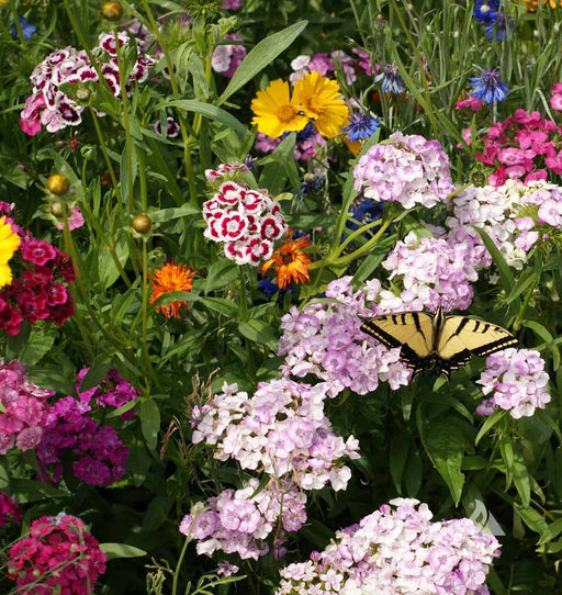 Butterfly Flower Seed Mixture