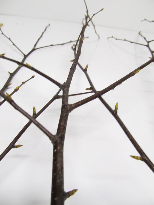 Natural Birch Branches - Per Branch