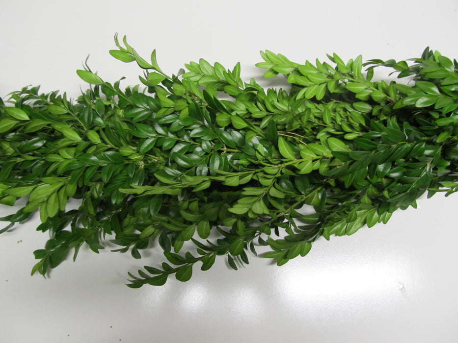 Boxwood Garland - Per Foot