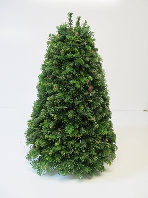 Table Top Fraser Fir Christmas Tree