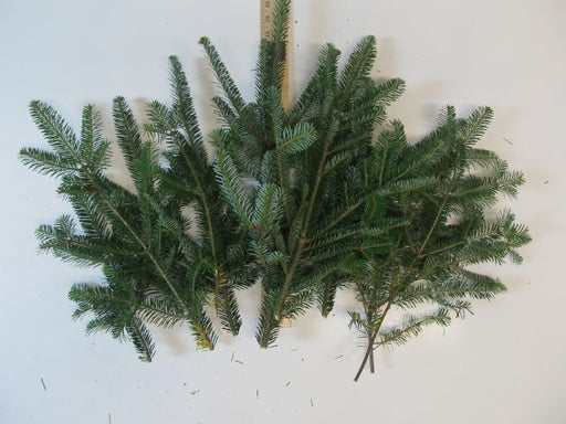 "8-18"" Fraser Fir Stems - Bundle of 10"