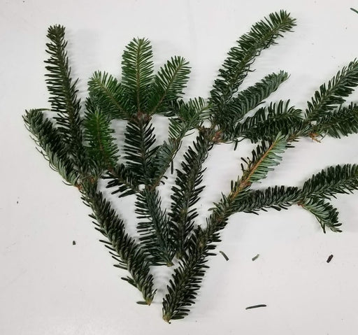 "4-8"" Fraser Fir Tips - 20 Per Pack"