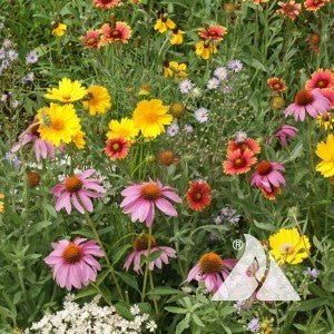 Honey Bee Flower Seed Mix