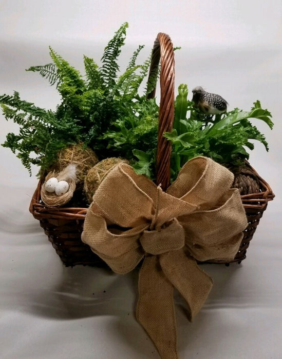 Lush and Lively:  Containers with Two Ferns