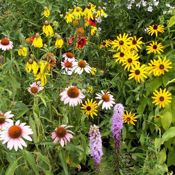 Native Perennial Mix