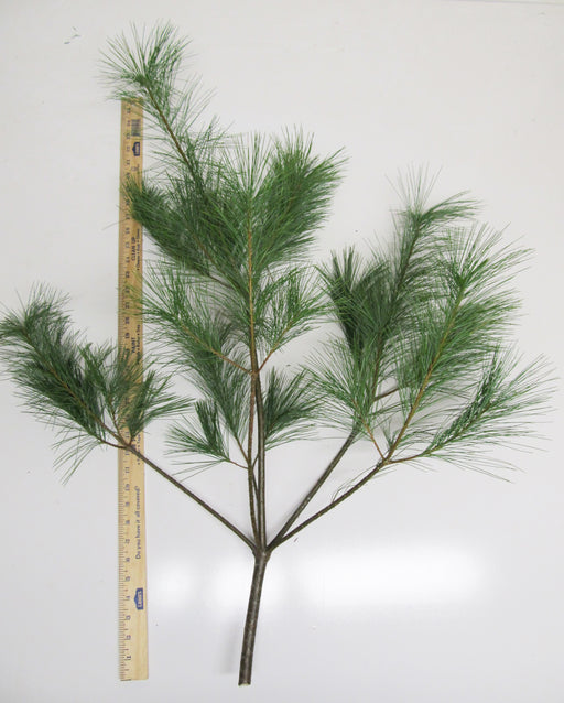 "30-36"" White Pine Sprays - Per Spray"