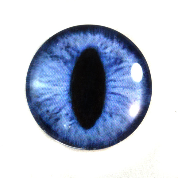 Blue Cat Glass Eye
