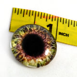 1 inch Brown and Cream Human Glass Eyes