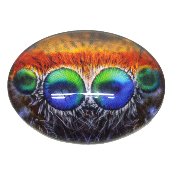 Colorful Jumping Spider Eyes Glass Cabochon