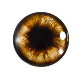 Brown Teddy Bear Glass Eye