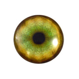glass tiger eye