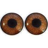 Griffon Brown Bird Glass Eyes